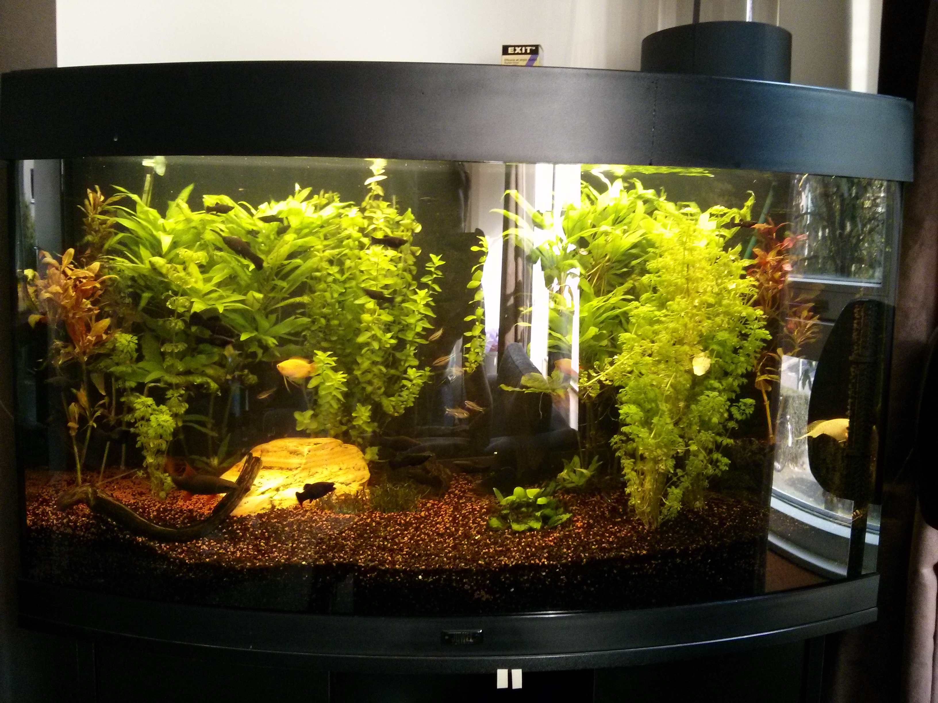 LED in je aquarium | Theuntje.org